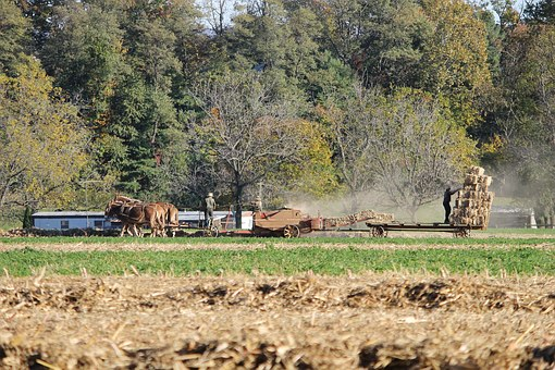 Amish, Pennsylvania, Farm, Rural, County, Lancaster