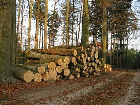 Wood, Beech, Kulatina, Stack, Sawn Timber, Forest