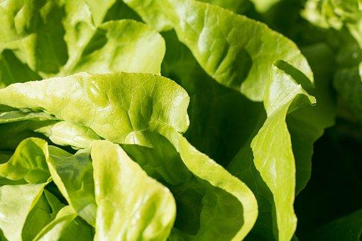 Salad, Lettuce, Green, Frisch, Eat, Vitamins