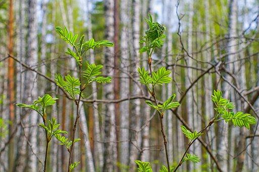 Spring, Sheet, Nature, Green, Green Leaves, Greens