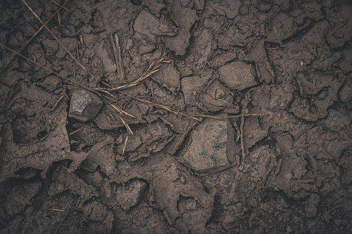 Earth, Ground, Brown, Nature, Cracks, Forest Floor