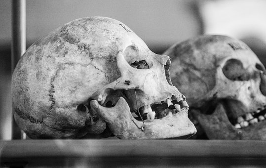 Skull, Old, Human Skull, Profile, Black And White