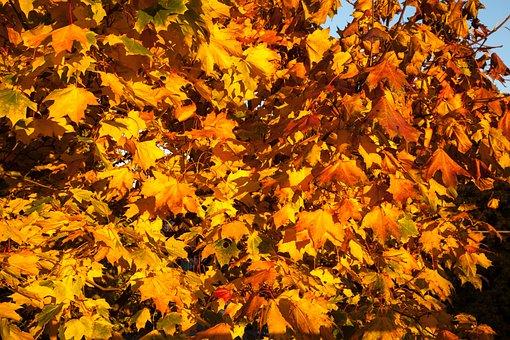Fall, Leaves, Orange, Yellow, Autumn, Season, Colored