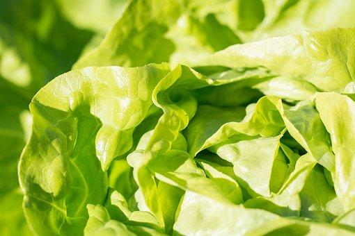 Salad, Lettuce, Green, Vitamins, Eat, Frisch