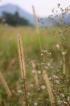Natural, Grass, Green, Flower, Fresh, Weeds
