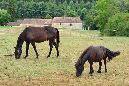 Horse, Pony, Prairie, Pre, Shepherd, Browse, Animals