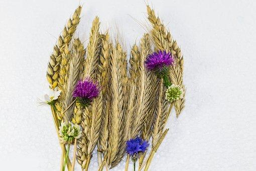 Grain Strauss, Wheat, Cornflower, Summer, Spike, Rye