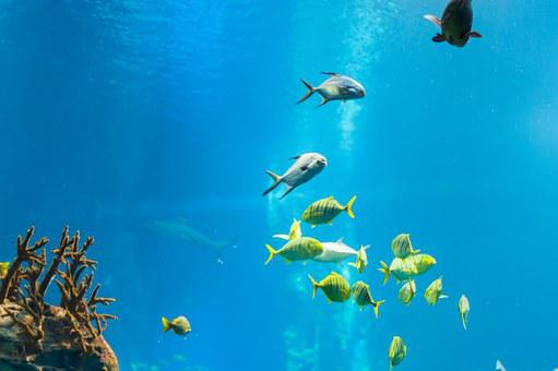 Ray, Fish, Water, Ocean, Sea, Nature, Blue