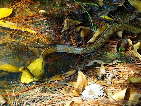Snake, Animals, Reptile, Animal, Nature, Venom