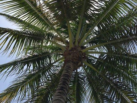 Palm Tree, Tree, Limbs, Clear, Blue, Sky, Summer