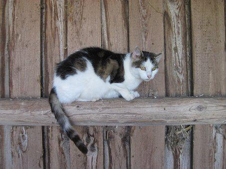 Cat, Wood, Stall, Domestic Cat, Wildlife Photography
