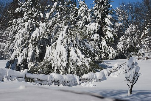 Snow, Cover, Drift, Drifting, Trees, Evergreens