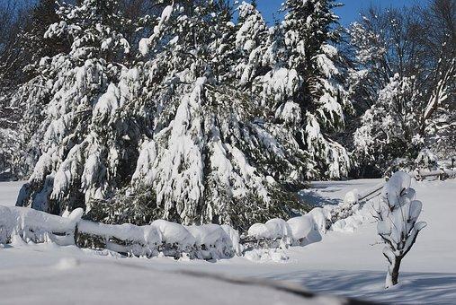 Snow, Cover, Drift, Drifting, Trees, Evergreens