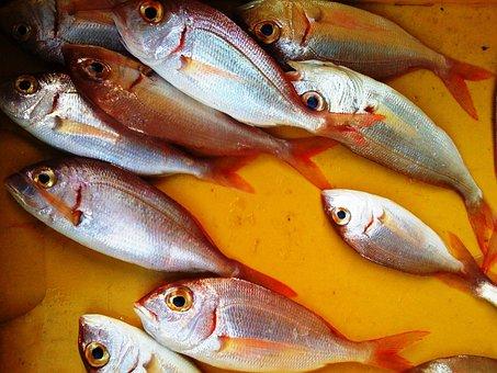 Fish, Fish Stall, Still Life, Fish Market, Italy