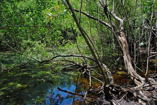 Marathon, Florida Keys, Crane Point, Nature Center