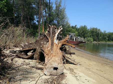 Tree Trunk, Fallen, Estuary, River, Kali, Forest