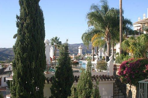 Palm Trees, Costa Del Sol, Spain, Aida Puebla