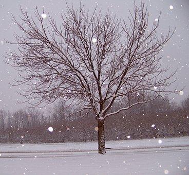 Snow, Tree, Christmas, Xmas, Season, Cold, Snowfall
