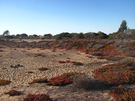 Desert, Sky, Ice Plant, Outdoors, Environment, Land