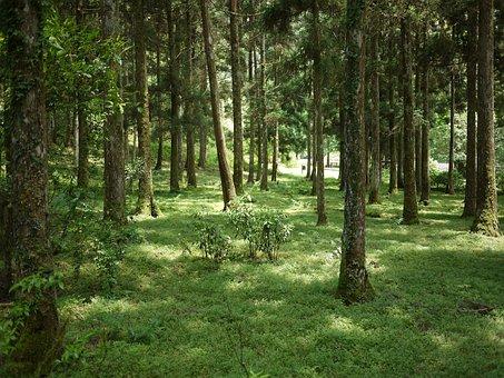 Taiwan, Ilan, Fukuyama, Botanical Garden, The Scenery