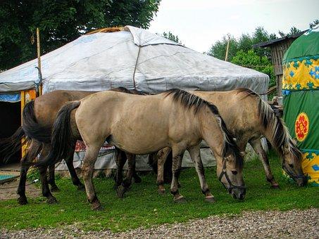 Yurt, Horses, Tatars, Kruszyniany, Islam