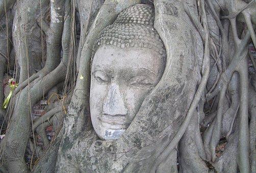 Buddha, Mystical Tree, Bangkok Travel, Tourism