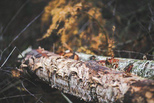 Tree, Trunk, Stump, Wood, Forest, Autumn, Fall, Damaged