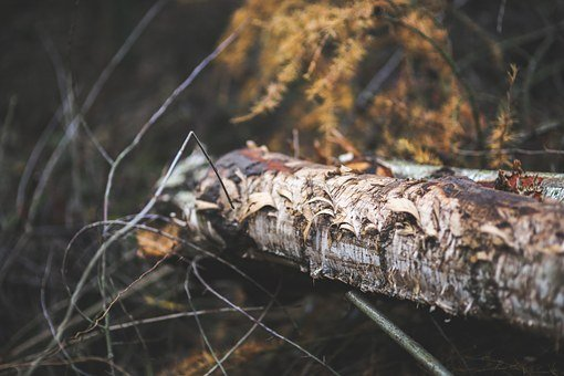 Trunk, Stump, Tree, Wood, Forest, Ragged, Damaged, Old