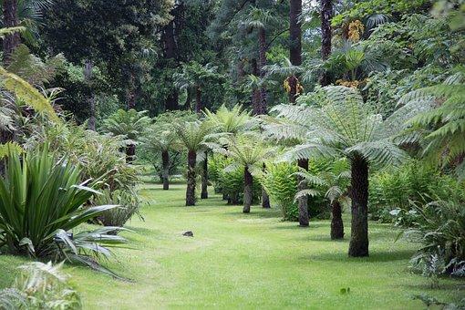 Park, Landscape, Trees, Lago Maggiore, Villa Taranto