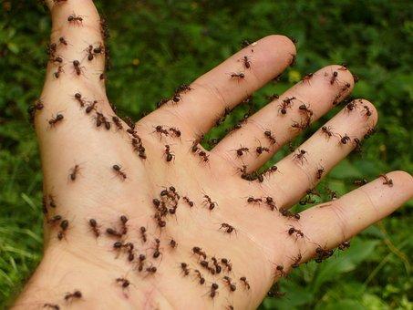Ants, Wood Ants, Hand, Risk, Disgust, Spooky, Creepy