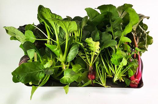 Hydroponic, Green, Vegetable, Plant, Hydroponic Plants