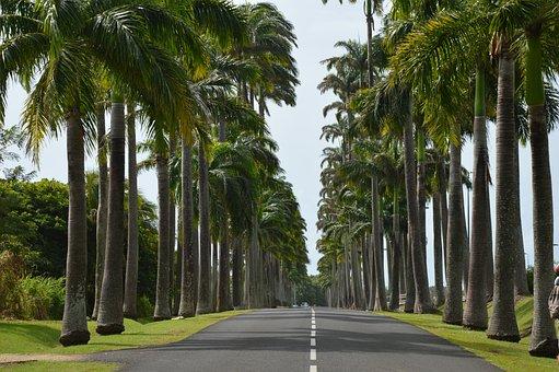 Guadeloupe, Palm, Road