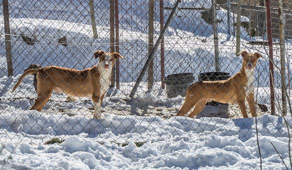 Dogs, Snow, Winter, Animals, Can, Roly, Pet, Nature