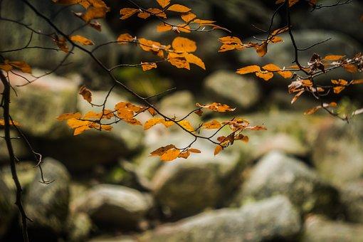 Foliage, Autumn, Nature, Stones, River
