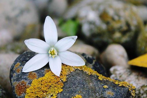 Blossom, Bloom, Blueme, White, Background, White Flower