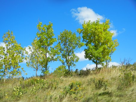 Trees, Sky, Clouds, Blue, Grass, Grassy, Forest, Hill