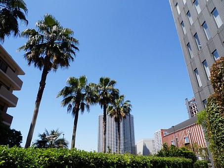 Palm Trees, Tokyo, Summer, High Rise Building