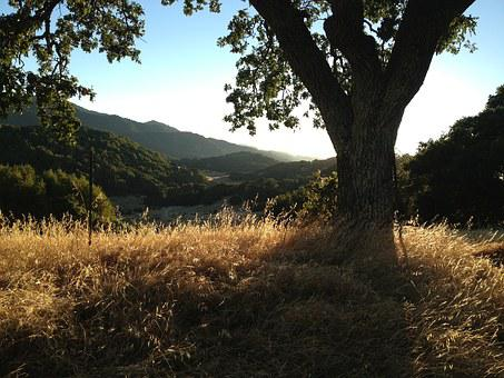 Oak Trees, Landscape, Grassy Hills