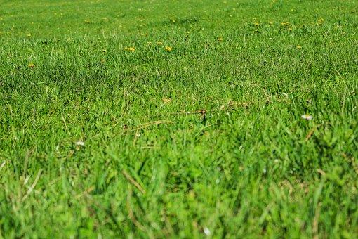Green, Grass, Nature, Grassy, Lawn, Plain, Spring