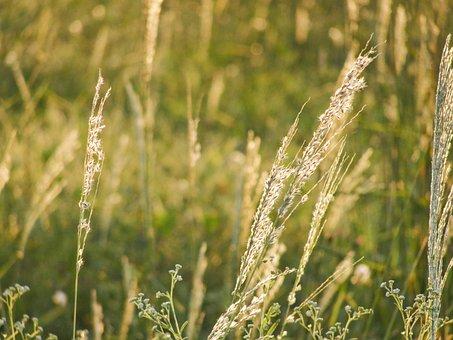 Grass, Field, Green, Nature, Meadow, Outdoor, Outdoors