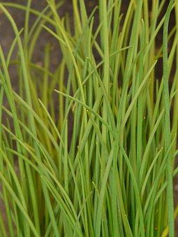 Chives, Leek, Kitchen Spice, Sharp, Green, Grassy