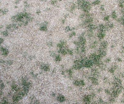 Texture, Grass, Background, Green, Field, Summer