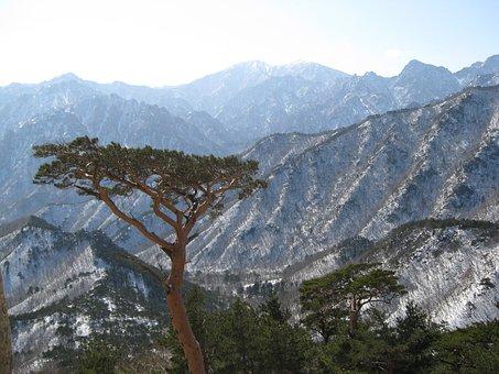 Mt Seoraksan, Ulsan Rock, Pine