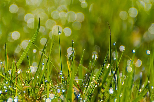 Grass, Grassy, Stalks, Green, Background, Wallpaper