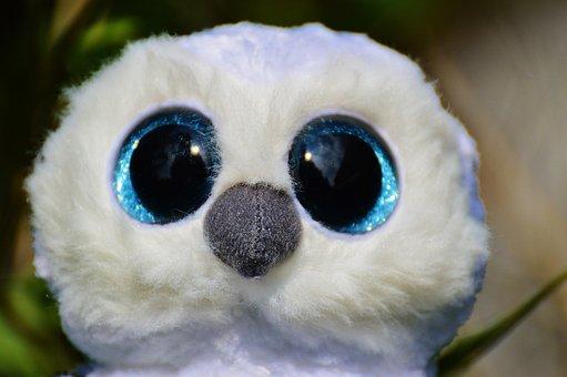 Snowy Owl, White, Bird, Feather, Glitter Eyes
