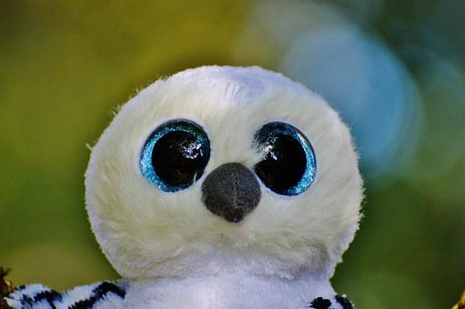 Snowy Owl, White, Bird, Feather, Glitter Eyes
