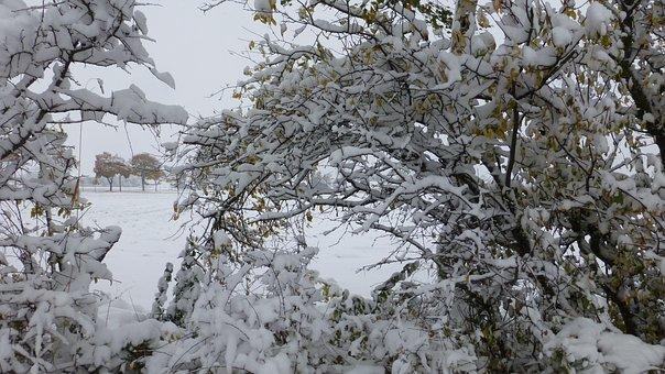 Bush, Snowy, Scrub, Coldsnap, Allgäu, Autumn, Snow