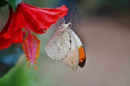 Butterfly, Animal, Insect, Nature, Animals, Brown