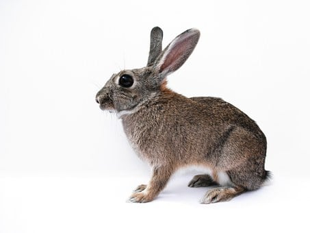 Rabbit, Bunny, Cute, Isolated, White, Background