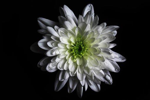 Flower, Colour, Green, White, Macro, Canon, Canon 1200d